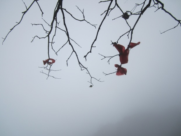 The fog makes the tree a dreaming dancer and the thread of red a poet. Why? Because the fog says so.
