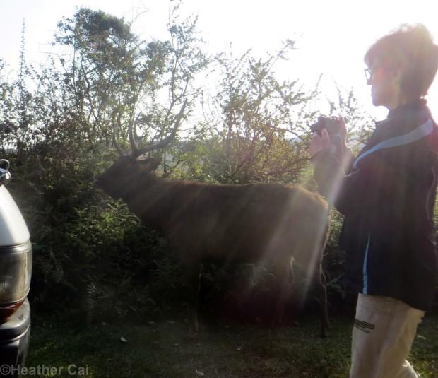 The Wild Deer!