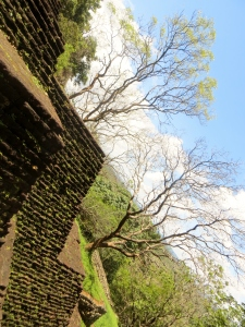 Another poetic image with beautiful trees behind the ancient wall.