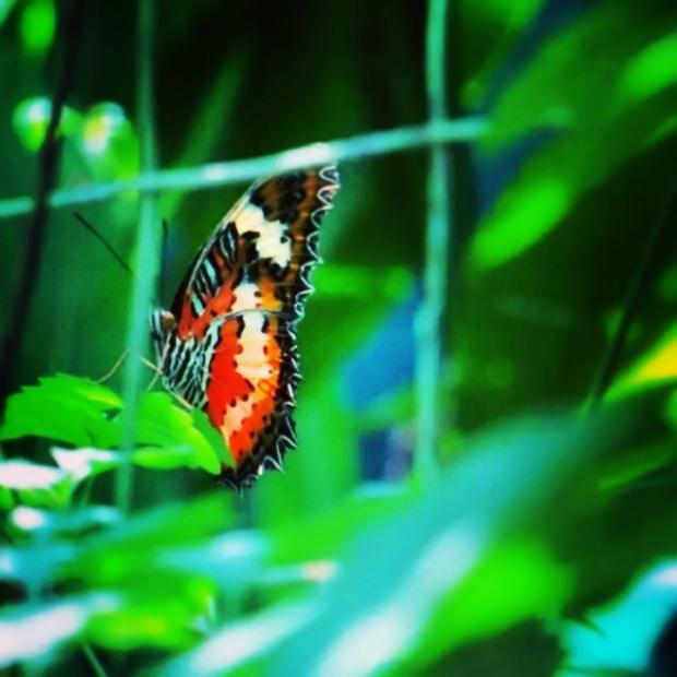 The Butterfly Rocks.