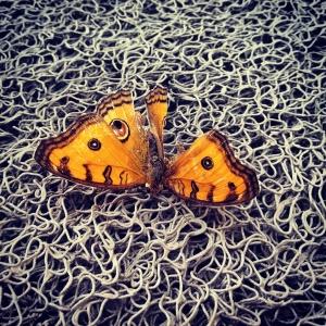 AnimalsIMG_20150718_161557